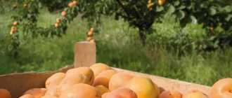 Болезни и вредители садовых растений