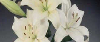 Легенды о лилии – Легенды о цветах, мифы и истории