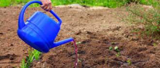Уход за клубникой: ТОП 10 советов для богатого урожая: рекомендации и фото