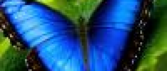 Уход за астрами. Как вырастить астры из семян – Садовые цветы