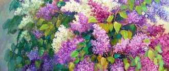 Сирень. Виды и сорта душистой сирени – Декоративно цветущие кустарники и деревья