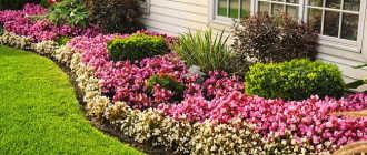 Как выбрать цветы для садового участка: советы и примечания