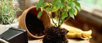 Основные элементы субстратов для комнатных растений. Почвенные смеси