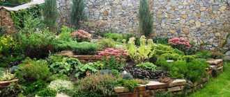 Перечень видов растений для альпийской горки (альпинария) – Садовые цветы