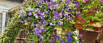 10 самых красивых вьющихся растений для вашего сада: идеи и фото