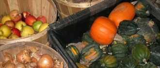 Хранение урожая в погребе или подвале