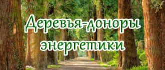 Деревья – доноры. Целительная сила деревьев