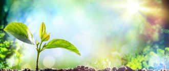 Растения и факторы их жизни