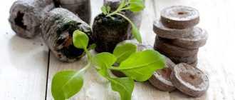 Торфяные таблетки для рассады. Выращивание петунии в торфяных таблетках – Садовые цветы