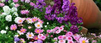 Цветник в саду – Цветочное оформление сада