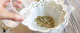 Семена, которые нельзя замачивать – что будет, если замочить перед посевом?