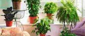 Размещение растений на специальных подставках