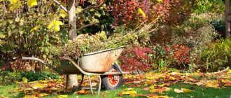 Как подготовить сад к зиме – 10 практических советов