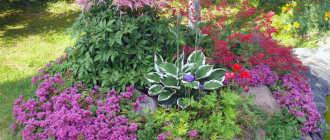 Растения для альпийской горки. Подбор растений для альпинария – Садовые цветы