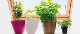 Рейтинг (ТОП-10) популярности комнатных растений