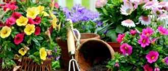 Самые неприхотливые садовые растения