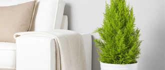 Растения в интерьере. Как увлажнить воздух в квартире