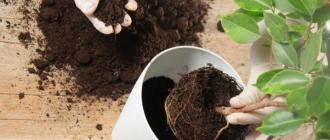 Как приготовить землю для комнатных цветов: советы и способы
