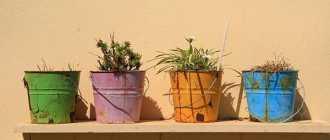Как правильно выбрать горшок для комнатных цветов. Мои рекомендации и советы