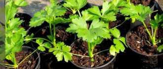 Семь основных правил ухода за растениями