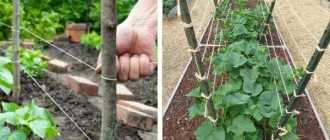 Как подвязывать огурцы: идея для ленивых, но изобретательных огородников