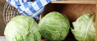 Когда убирать капусту с огорода? Личный опыт фермерского хозяйства.