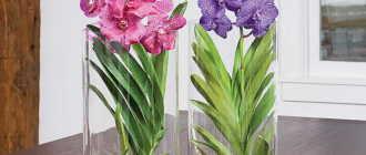 Орхидея в стеклянной вазе. Ванда – стильная красавица в достойном обрамлении
