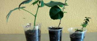 Размножение и черенкования комнатных растений