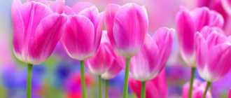 Английская сказка о тюльпане – Сказки о цветах, легенды и притчи о природе, восточные истории