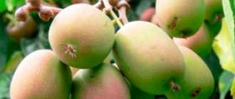 Плодовые деревья. Декоративные и плодово-ягодные кустарники и деревья – Садовые растения