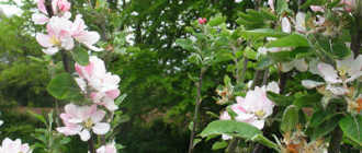 Чем заняться на даче в мае? План работ для садоводов: рекомендации и фото