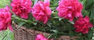 Полезные советы цветоводу и садоводу