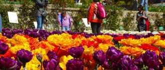 Выставка тюльпанов. Фото и тюльпаны в Никитском ботаническом саду