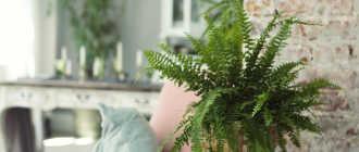 Неприхотливые комнатные растения в вашем доме