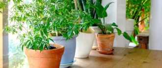 Условия адаптации для домашних растений